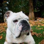 Guaranteed Dog Training Methods