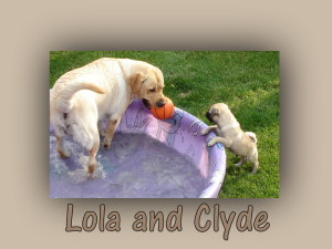 Lola and Clyde eat holistic dog food