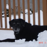 Lady loves the snow.