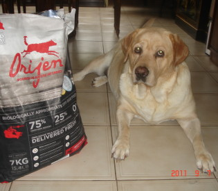 Best Raw Dog Food Toronto