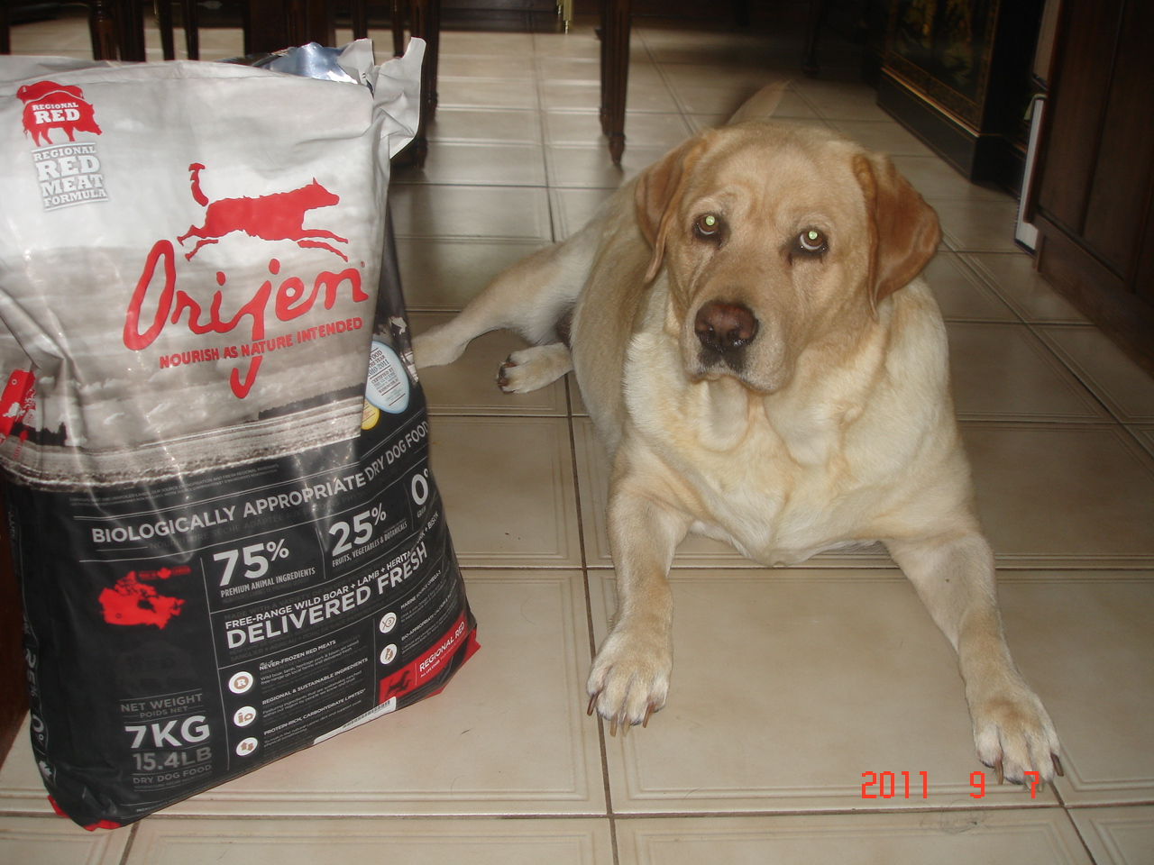 Dog Food That Will Alow Down Stress Hormonea