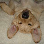 Lola sleeping (cute)