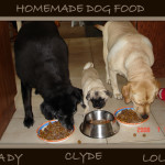 Lady, Lola and Clyde the pug eating  homemade dog food