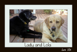 Lady and Lola