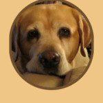 Top 10 Dog Foods – 10 Best Dog Foods – Dog Food Reviews,  2017