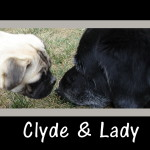 clyde the pug and lady eat organic dog food