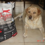 BEST DOG FOOD  @ Better Food For Dogs